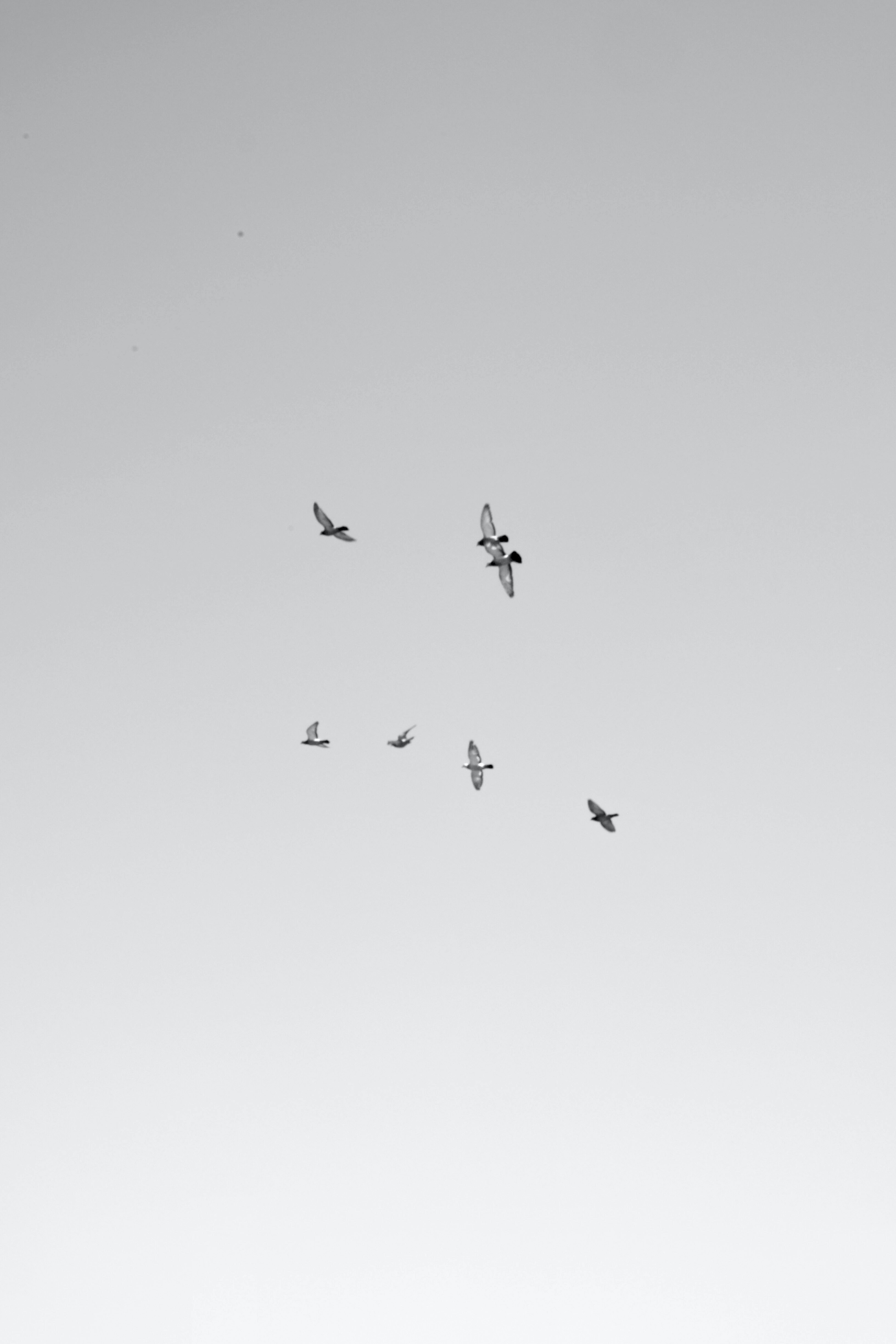 seven white birds flying