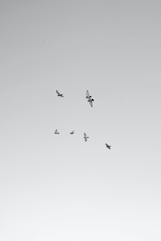 seven white birds flying