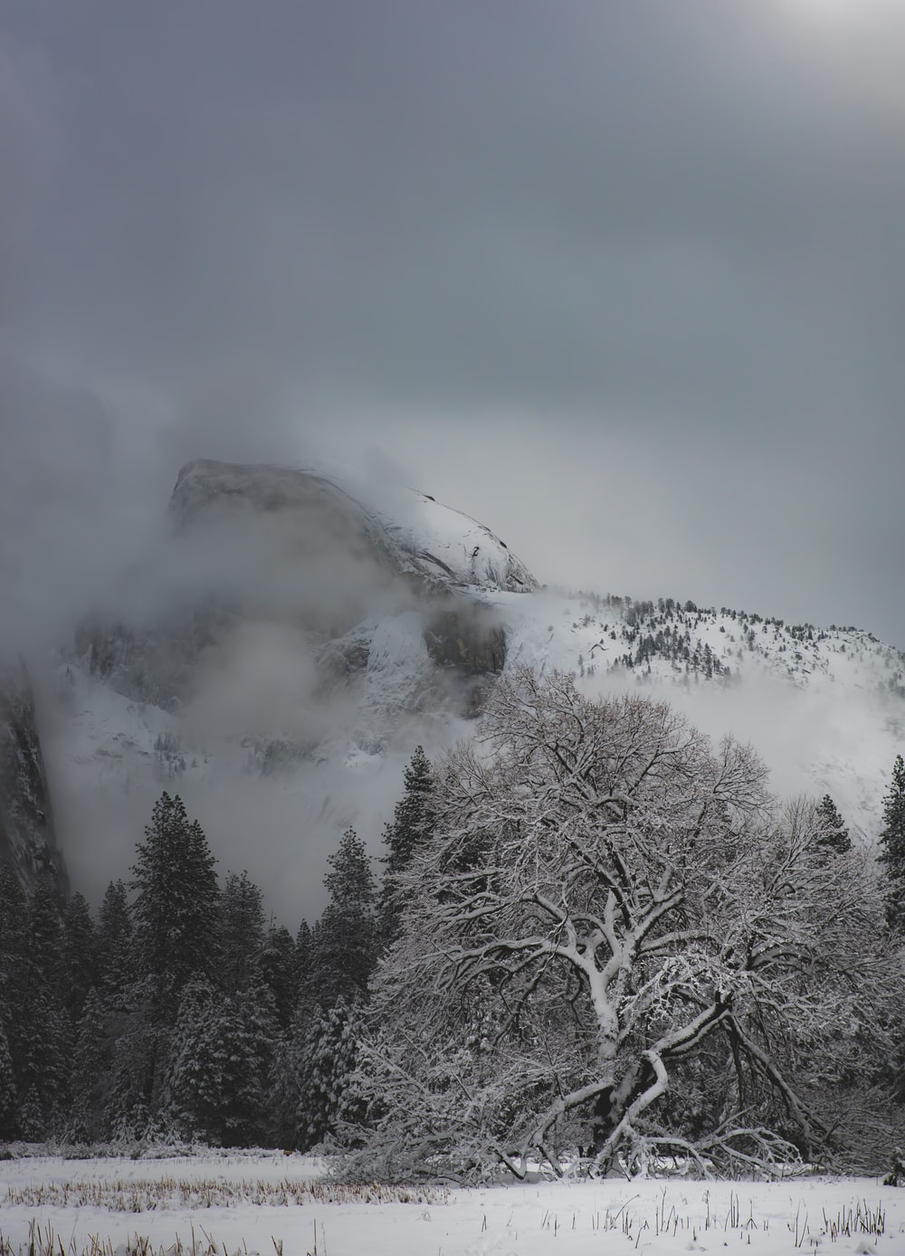 landscape photo of mountain and tree covered with snow