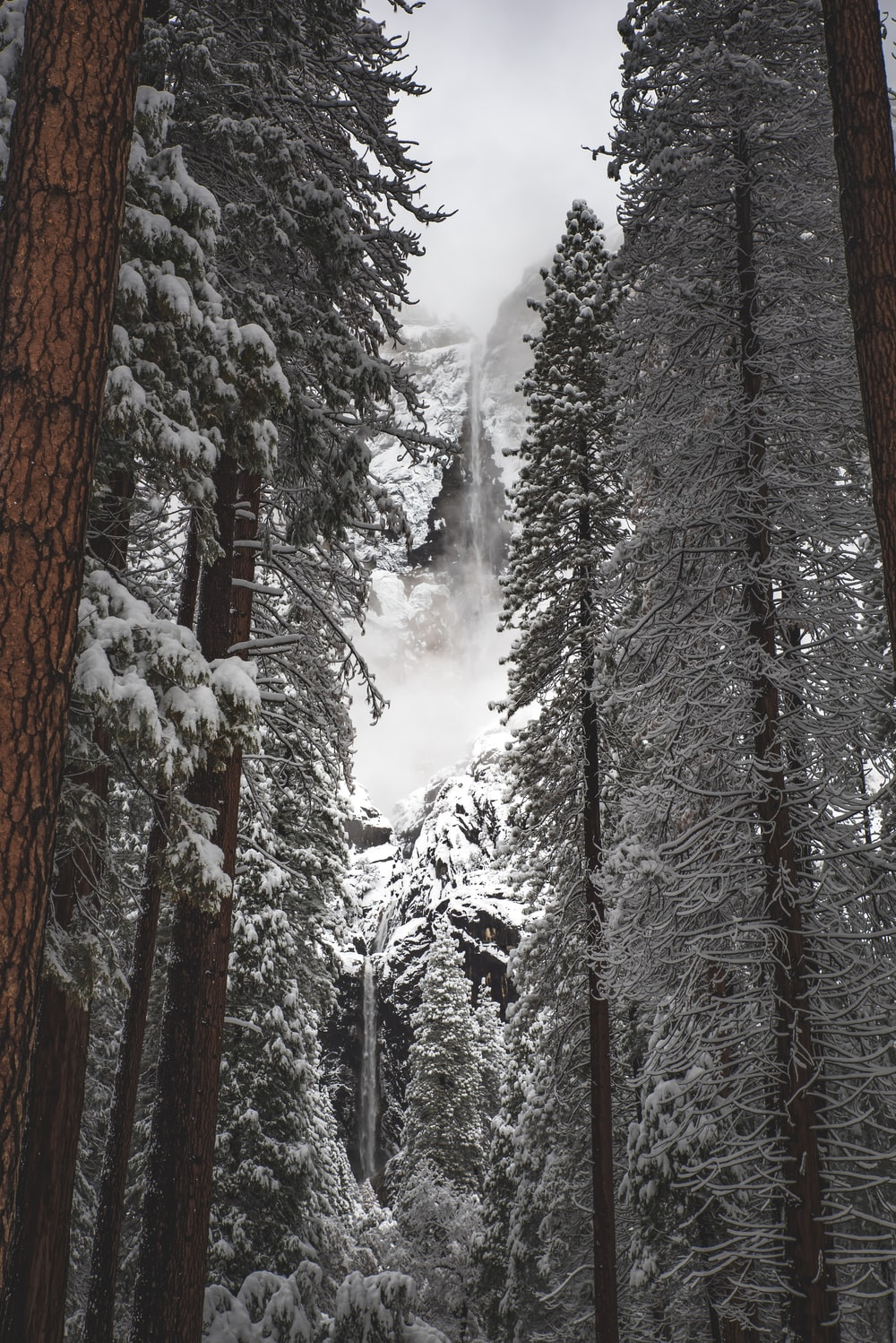 low angle photo of brown trees covered with snow at daytime