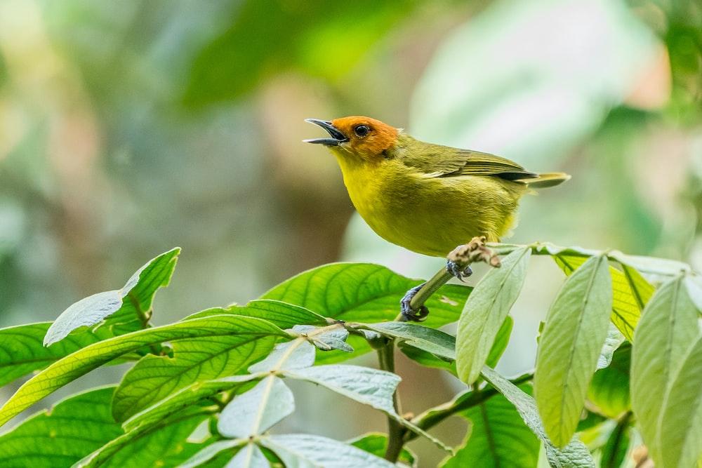yellow bird perching on green leaf tree during daytime