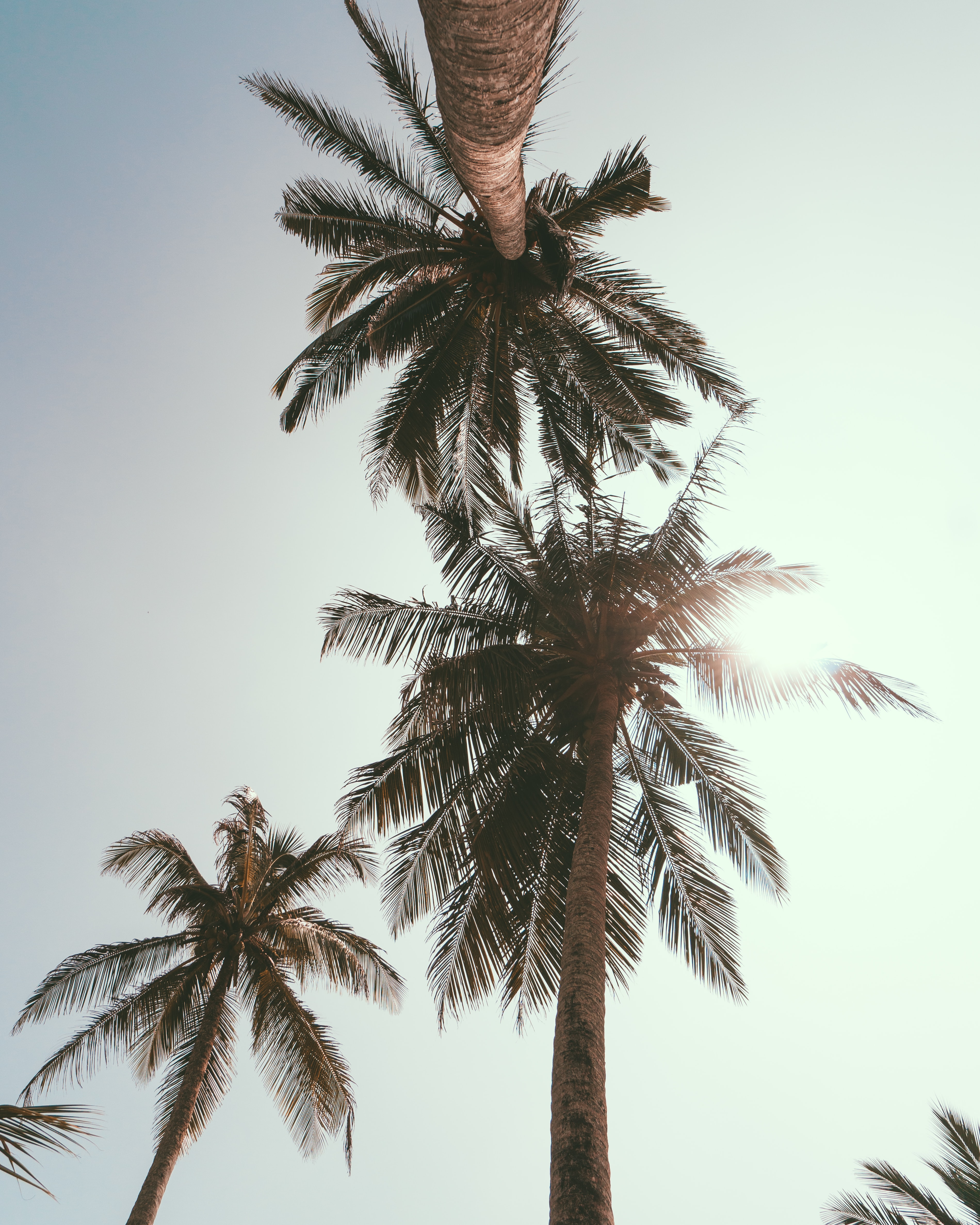 worm's eye view photo of palm trees