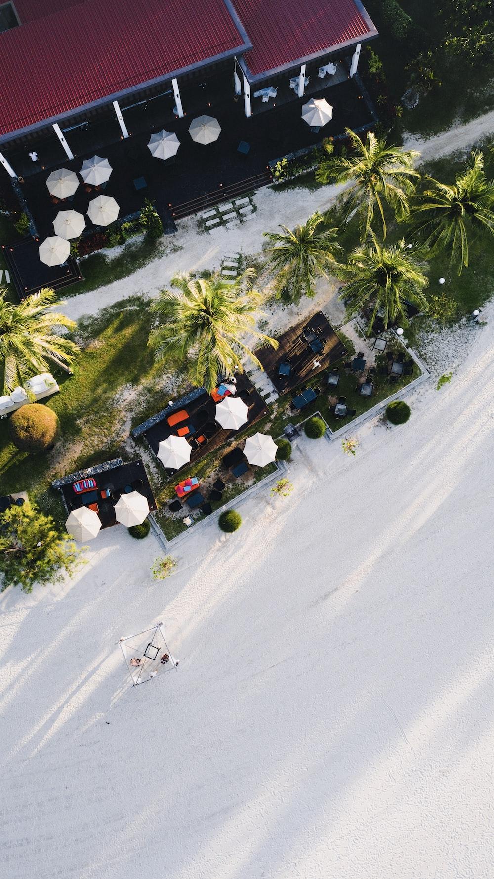 bird's eye photography of patio umbrellas and palm trees