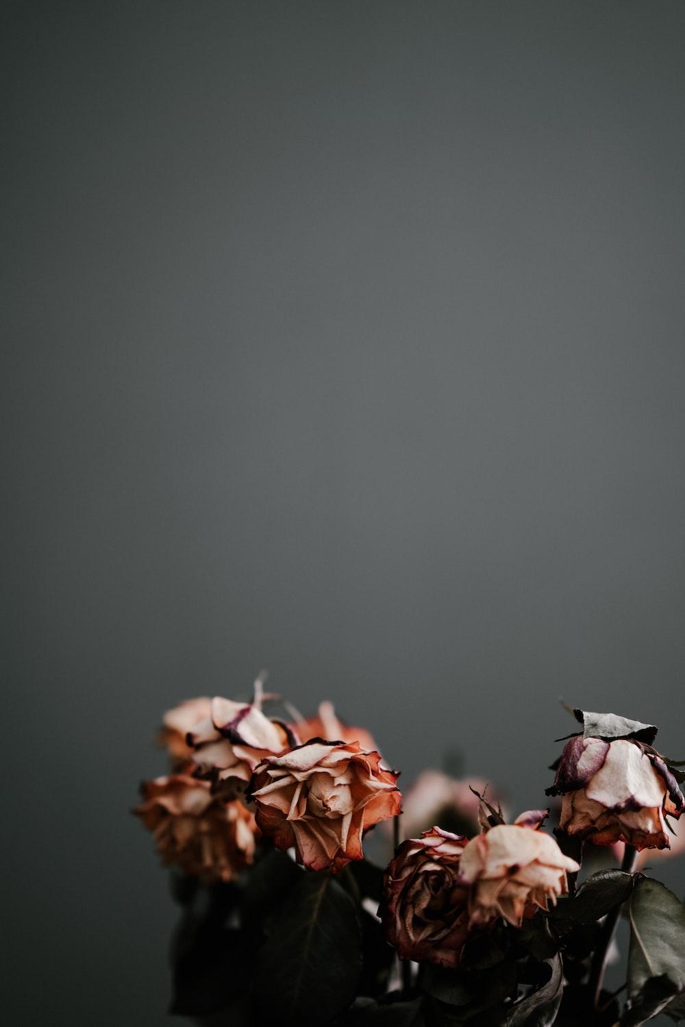 dry beige flower