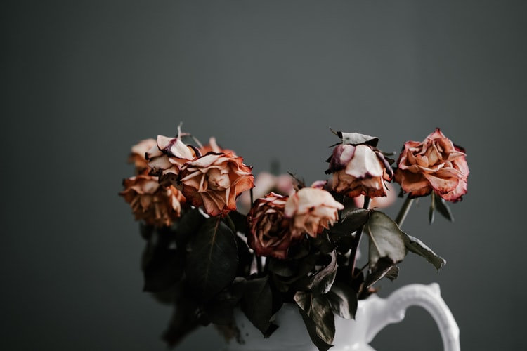 A white vase with a dozen roses in it - the roses are dried and wilted.