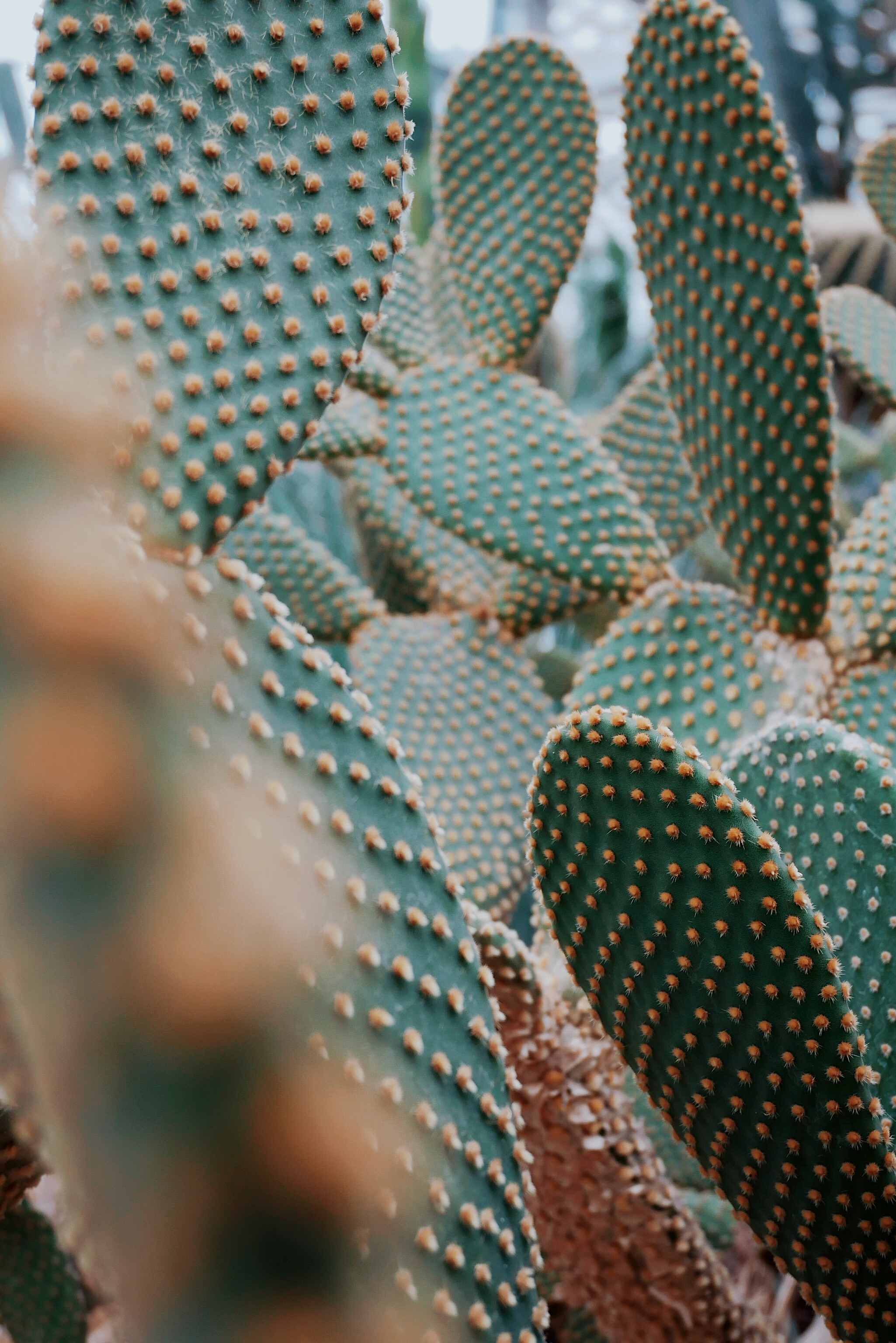 close up photo of green cactus during daytime