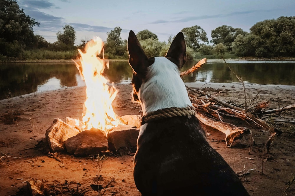 dog sitting in front of campfire near body of water during daytime