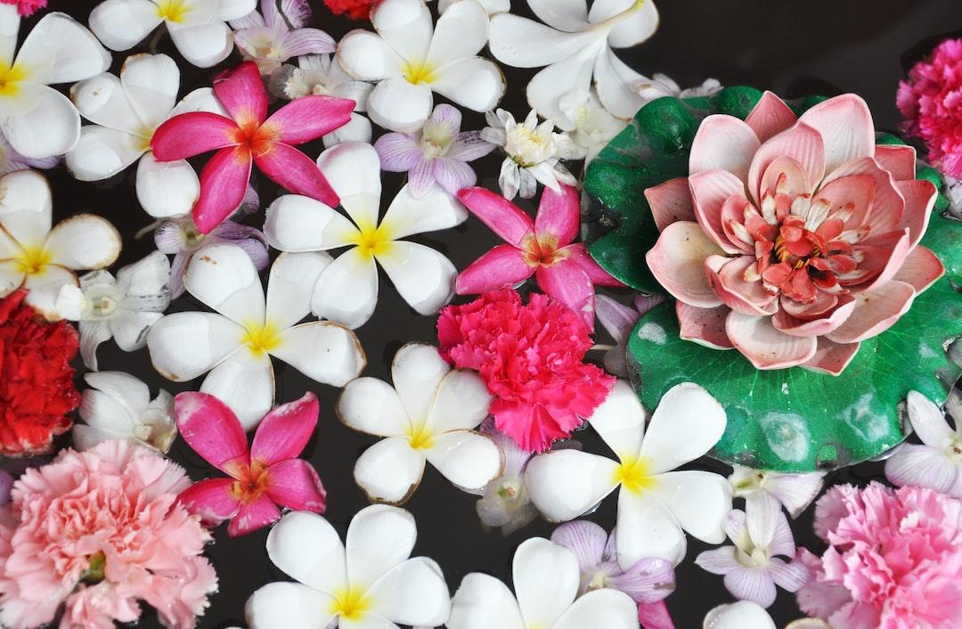 100 flowers images download free images on unsplash - Flower wallpaper dp ...