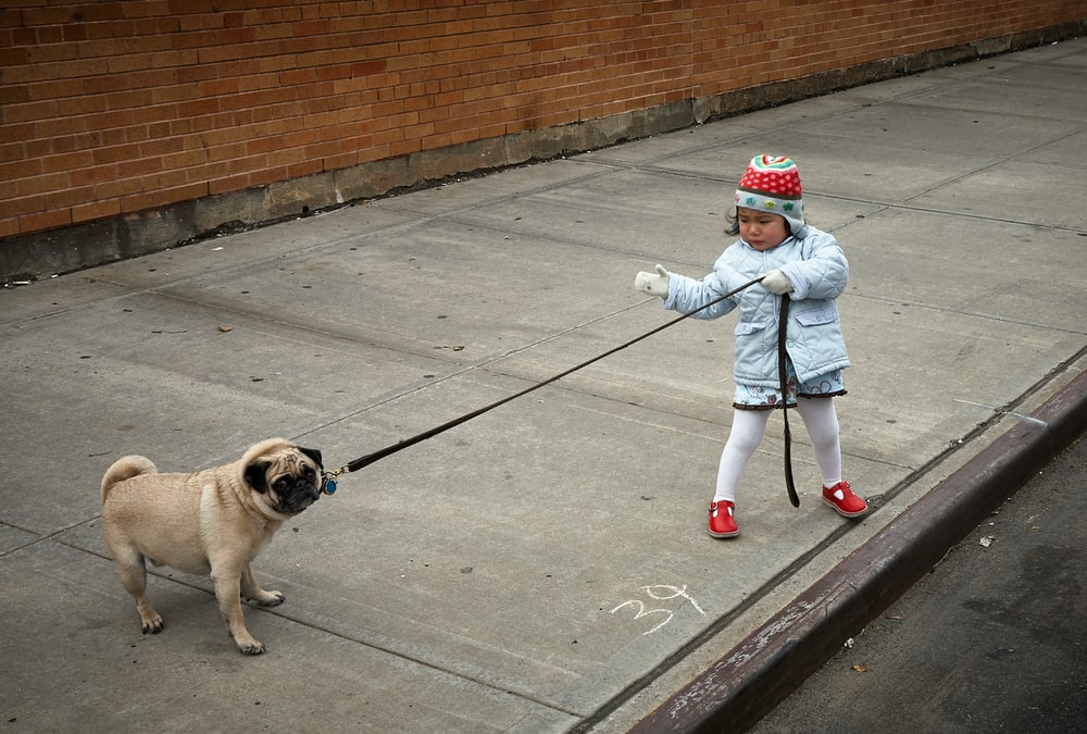 girl pulling the collar of dog during daytime