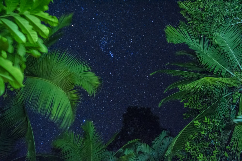 green leafed plants under starry sky