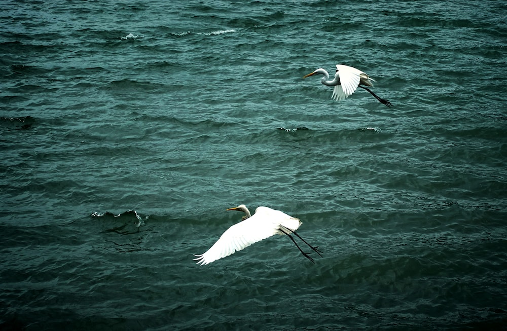 two white seagulls in the sky