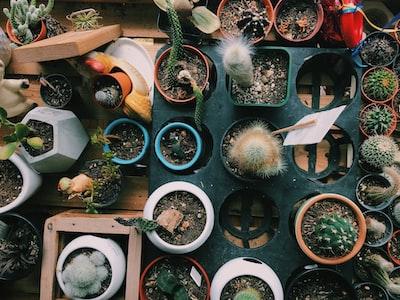 cactus plant lot cactu zoom background