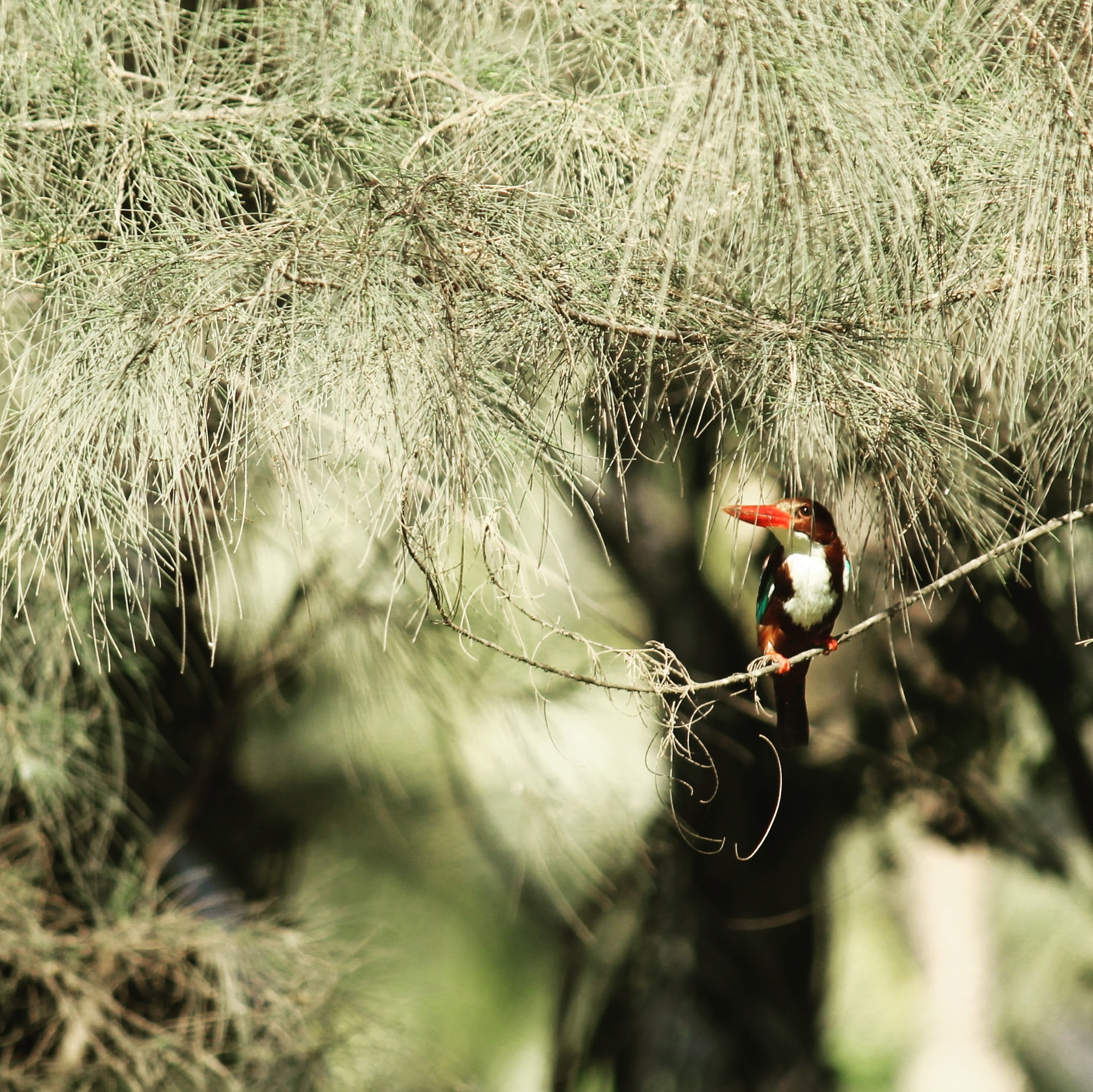 selective focus photography of bird on branch of tree