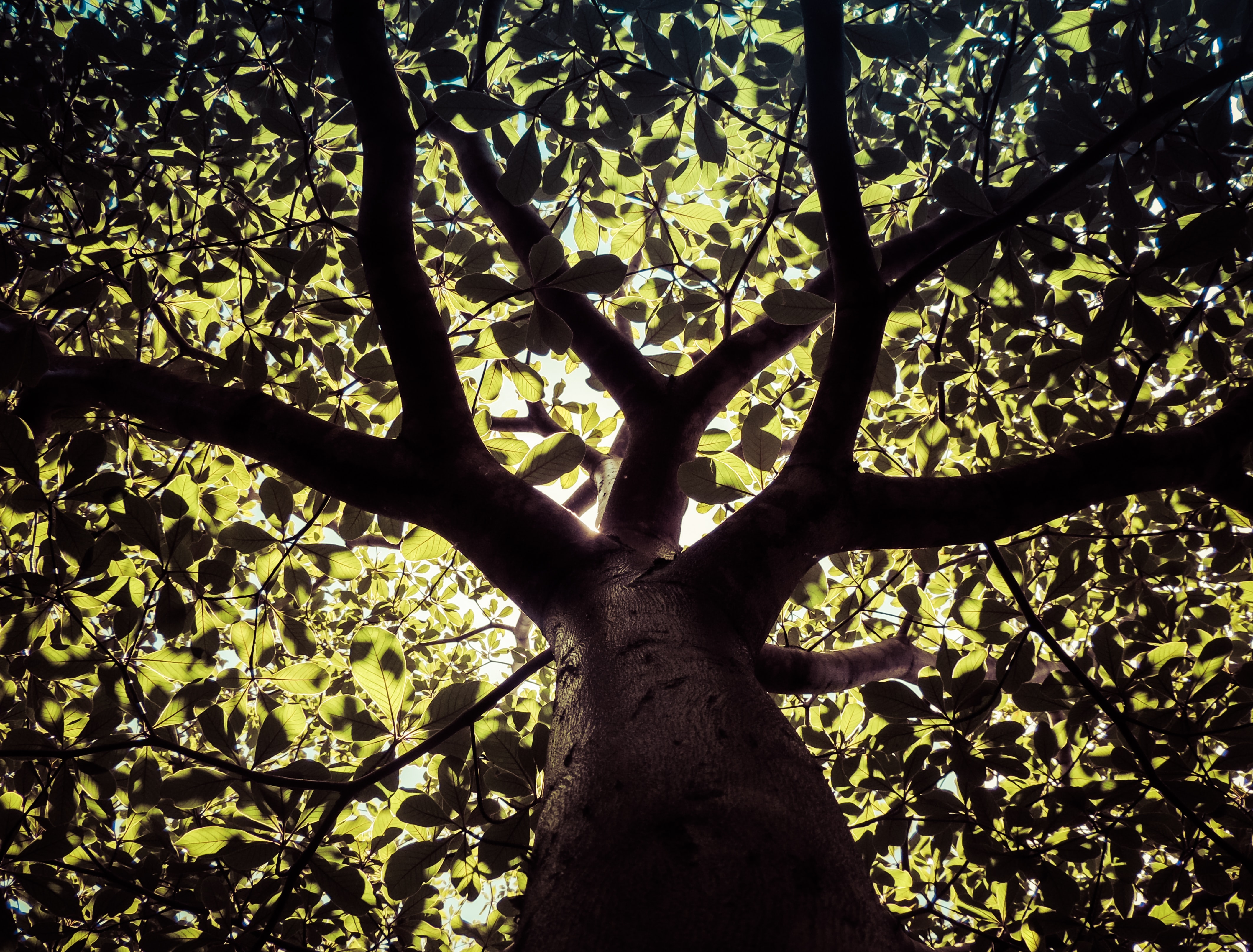 low angle photography of black and green tree