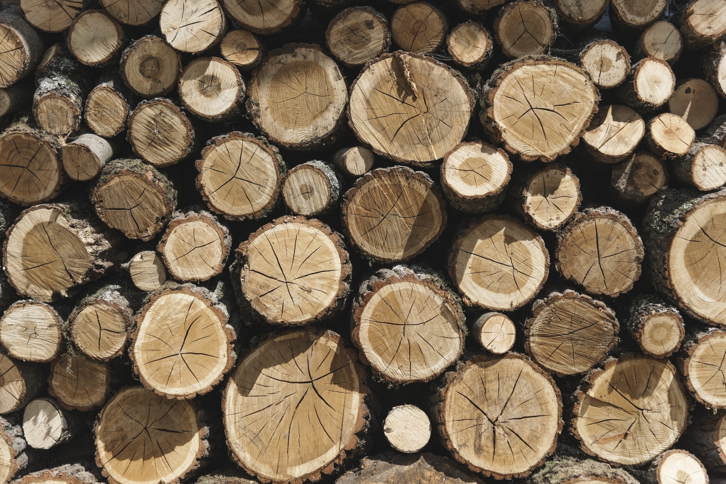 close up photography of firewood cord