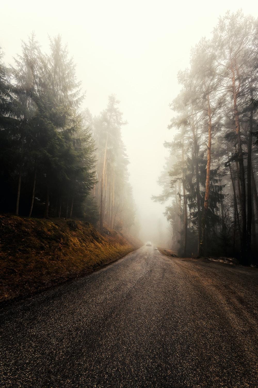 empty road between pine trees under white sky