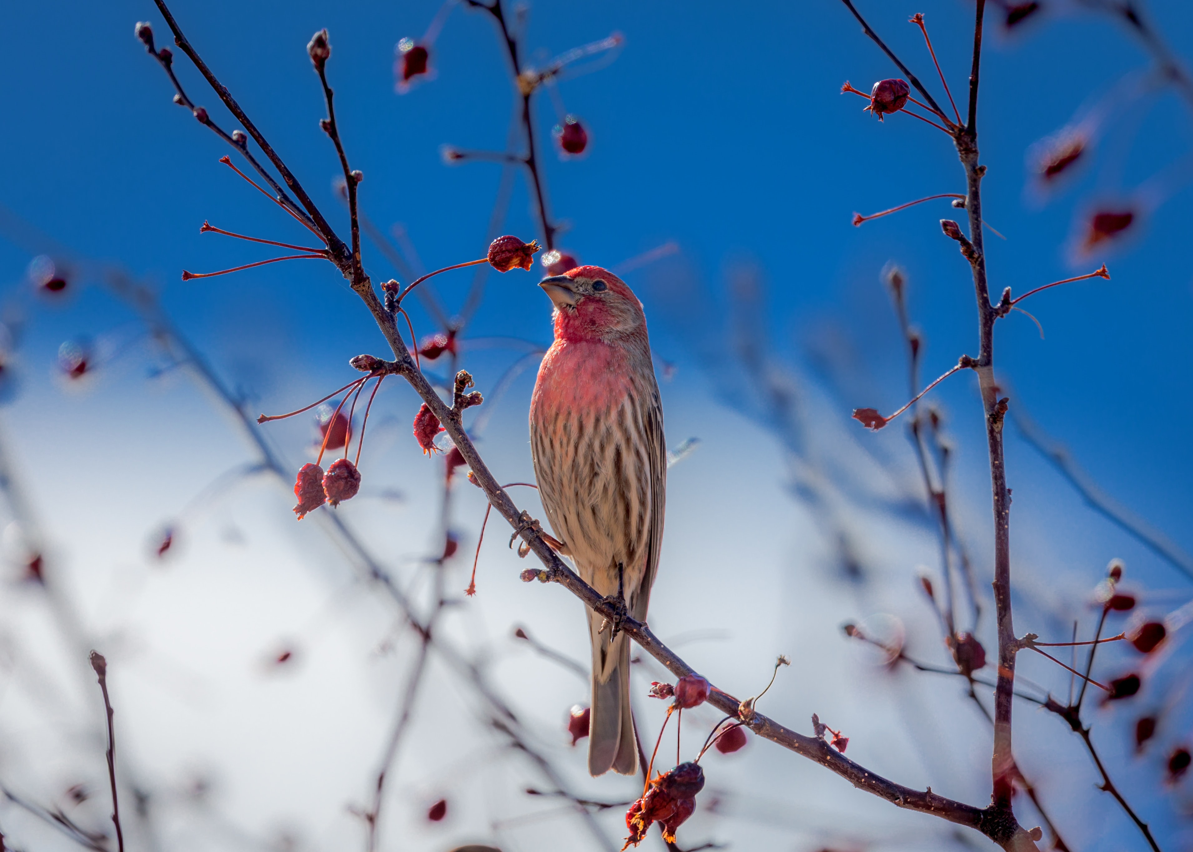 white and red bird on brown tree stem