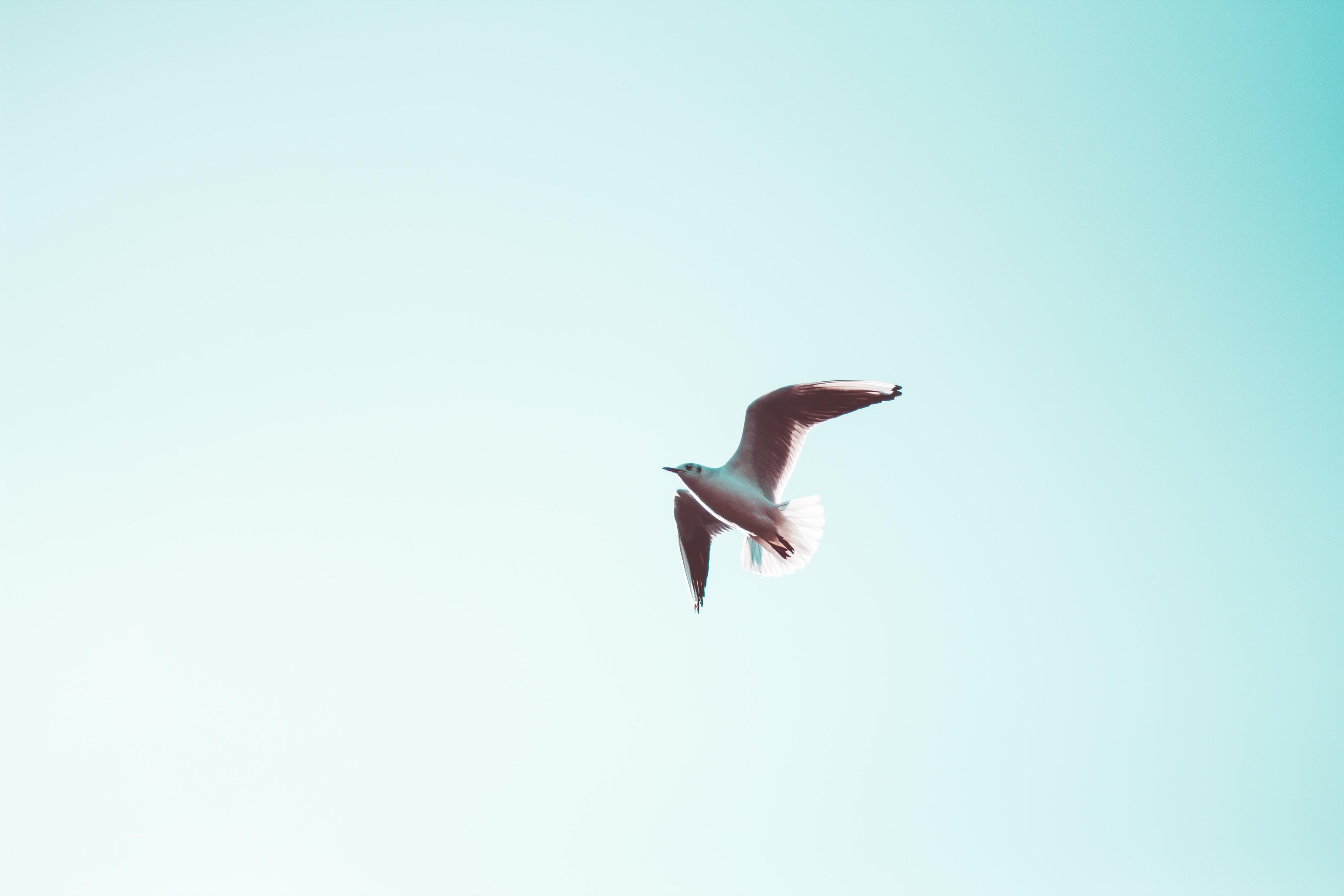 white seagull under blue sky