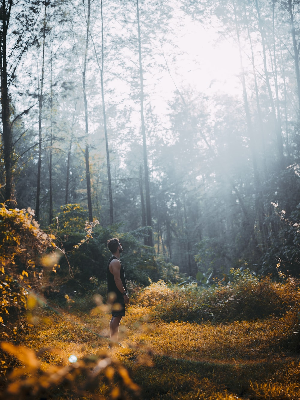man standing on brown grass and looking up at forest