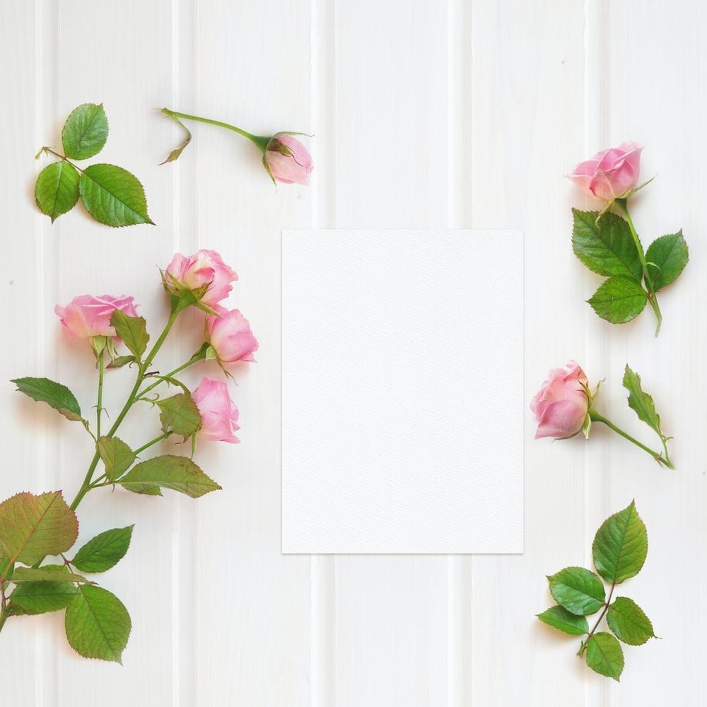 pink roses on white wooden surface