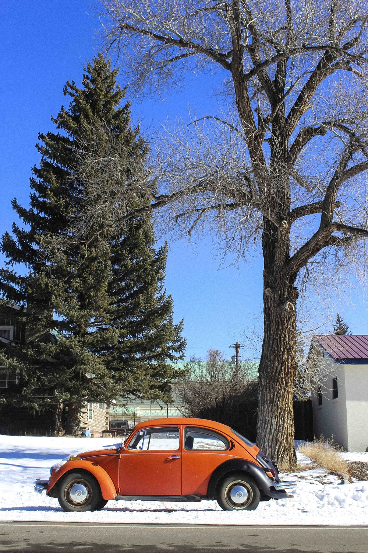 orange Volkswagen Beetle under withered tree