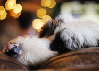 closeup photo of white and black dog