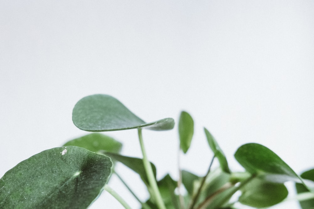 selective focus photo of oblate leaf plant