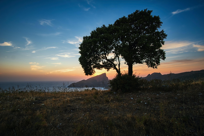silhouette photo of tree near beach shore