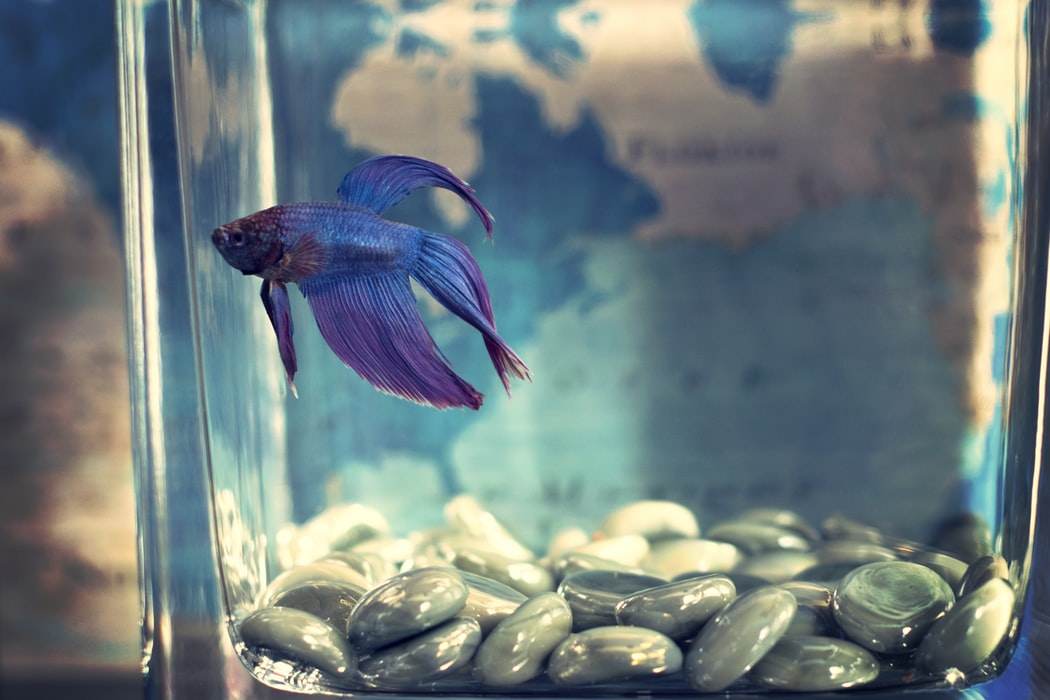 The Best Water For Betta Fish On The Market In 2019