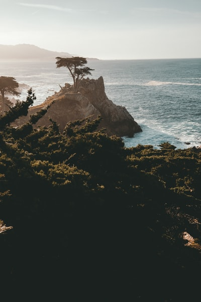 tree on cliff beside sea