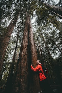 man hugging a tree at the forest