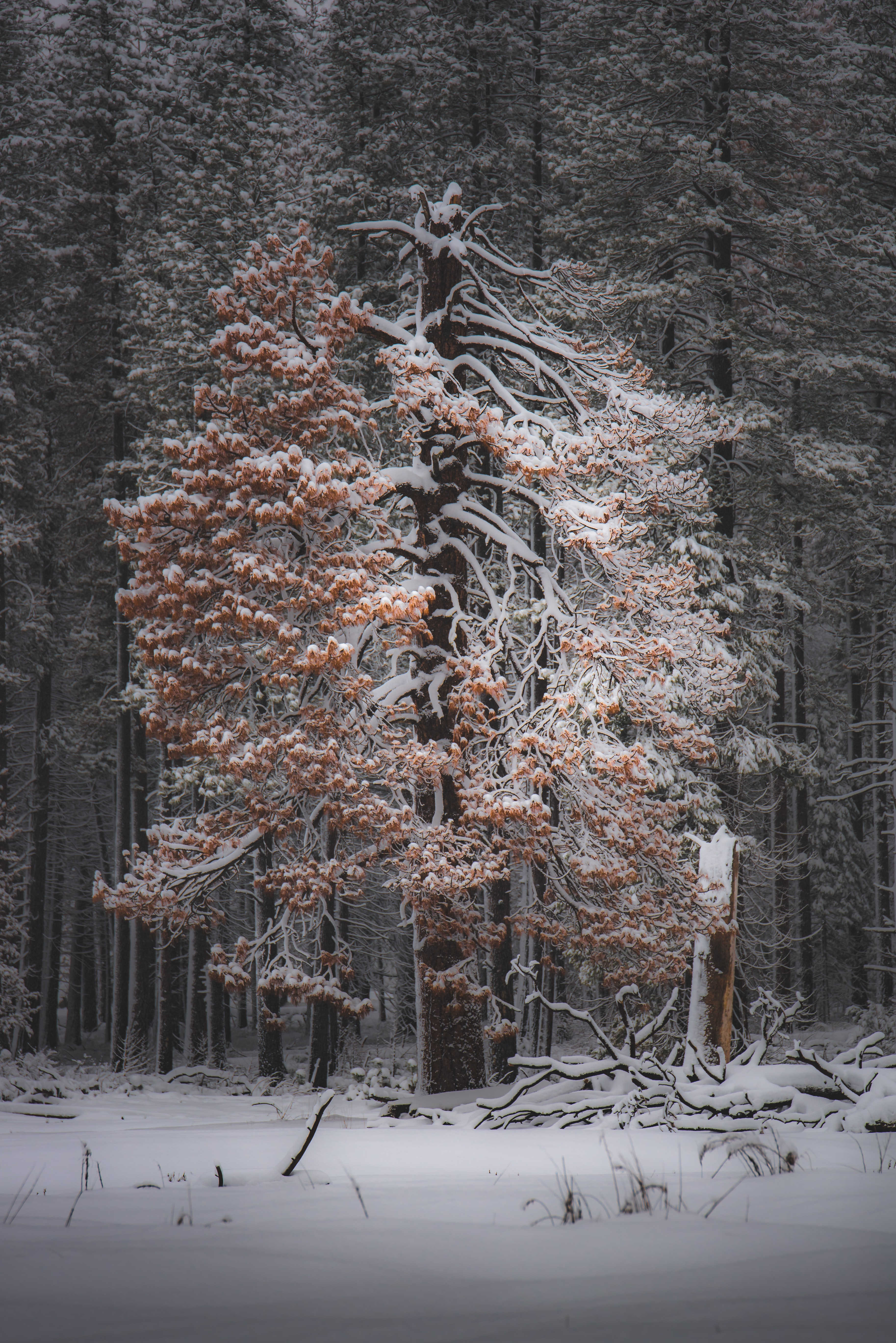 tree covered by snow during daytime
