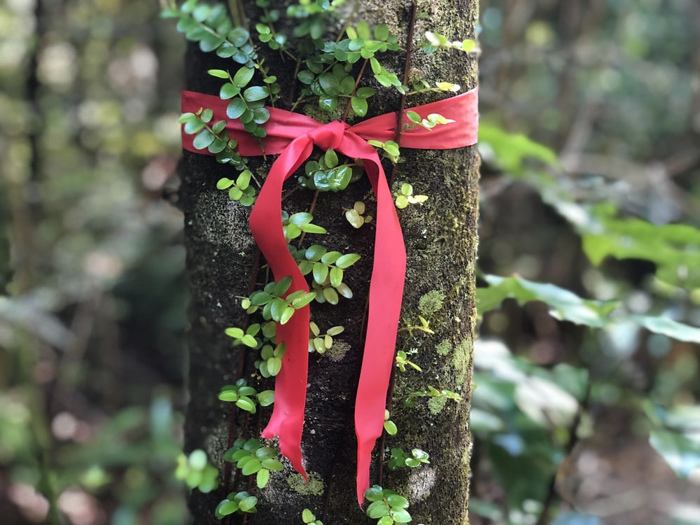 red ribbon tied on tree trunk