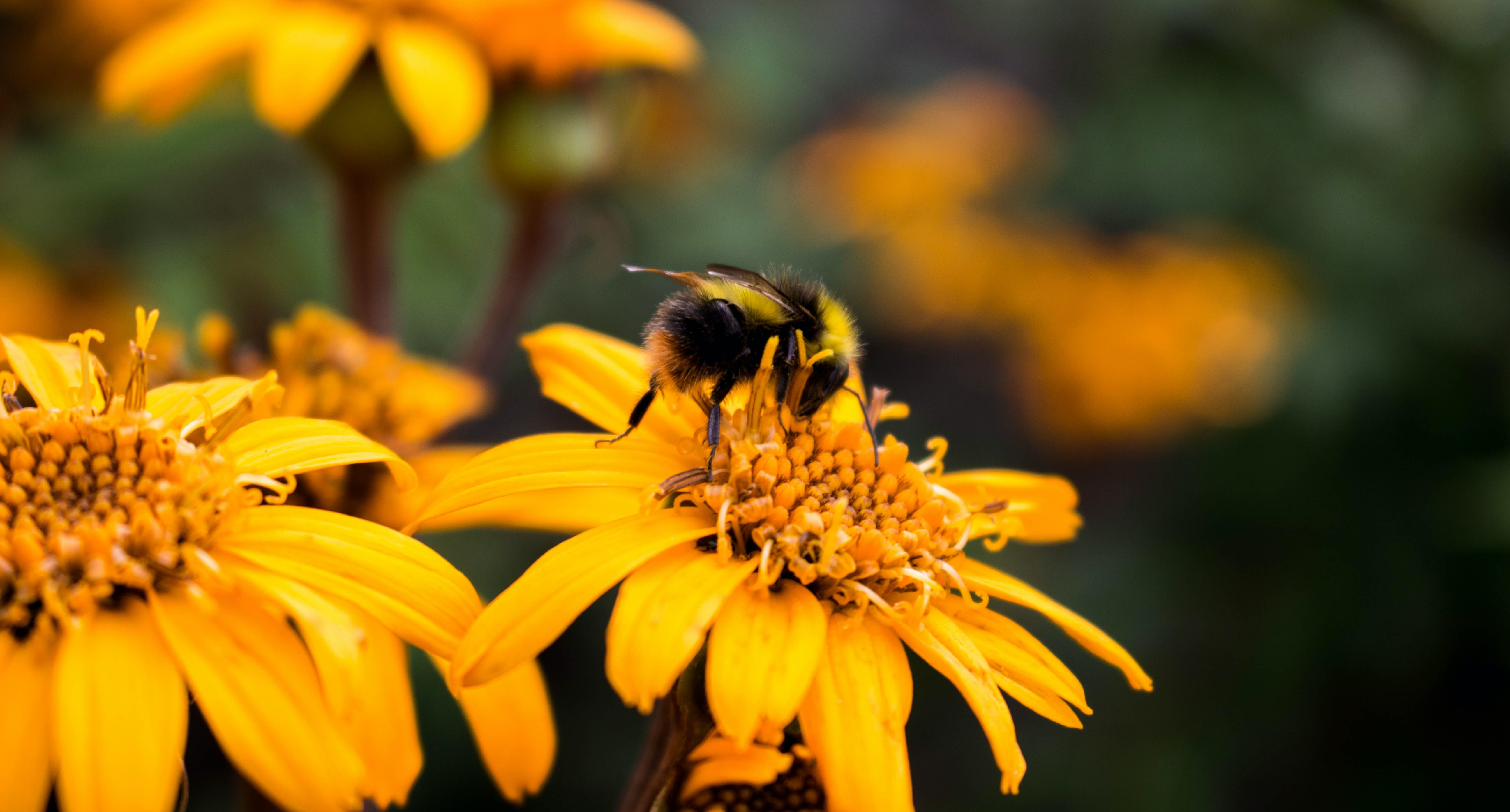 shallow focus photography of bumblebee