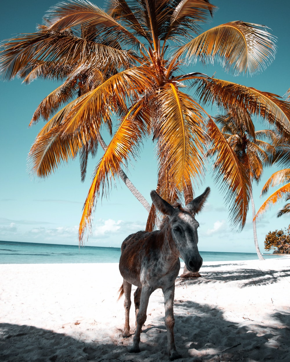 white and brown donkey on the seashore