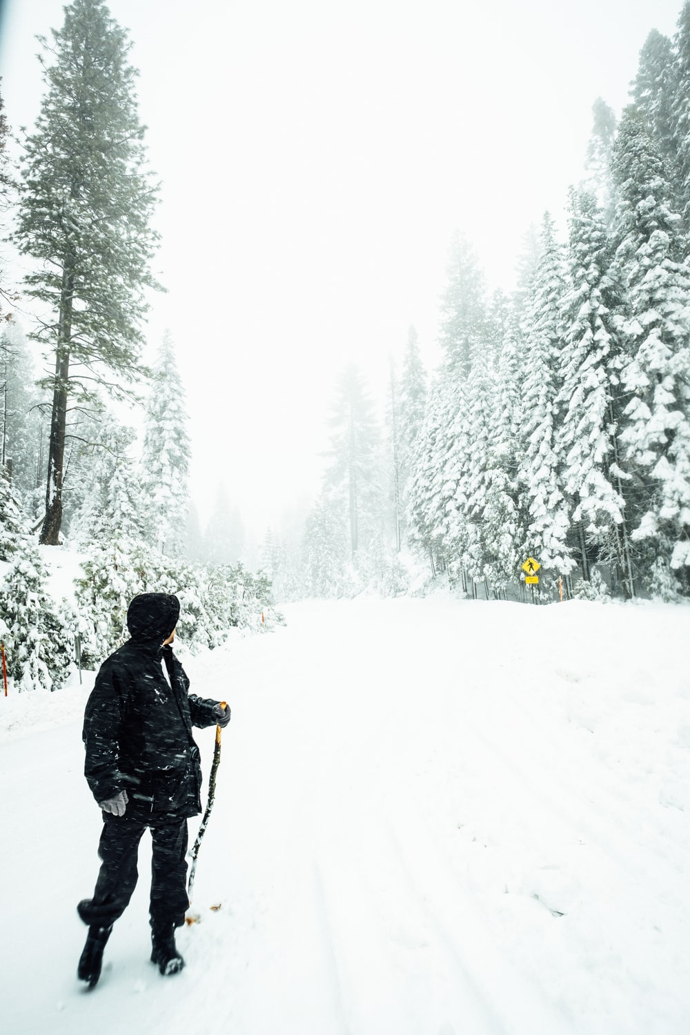 person holding black ski pole between green pine trees covered with snow during daytime