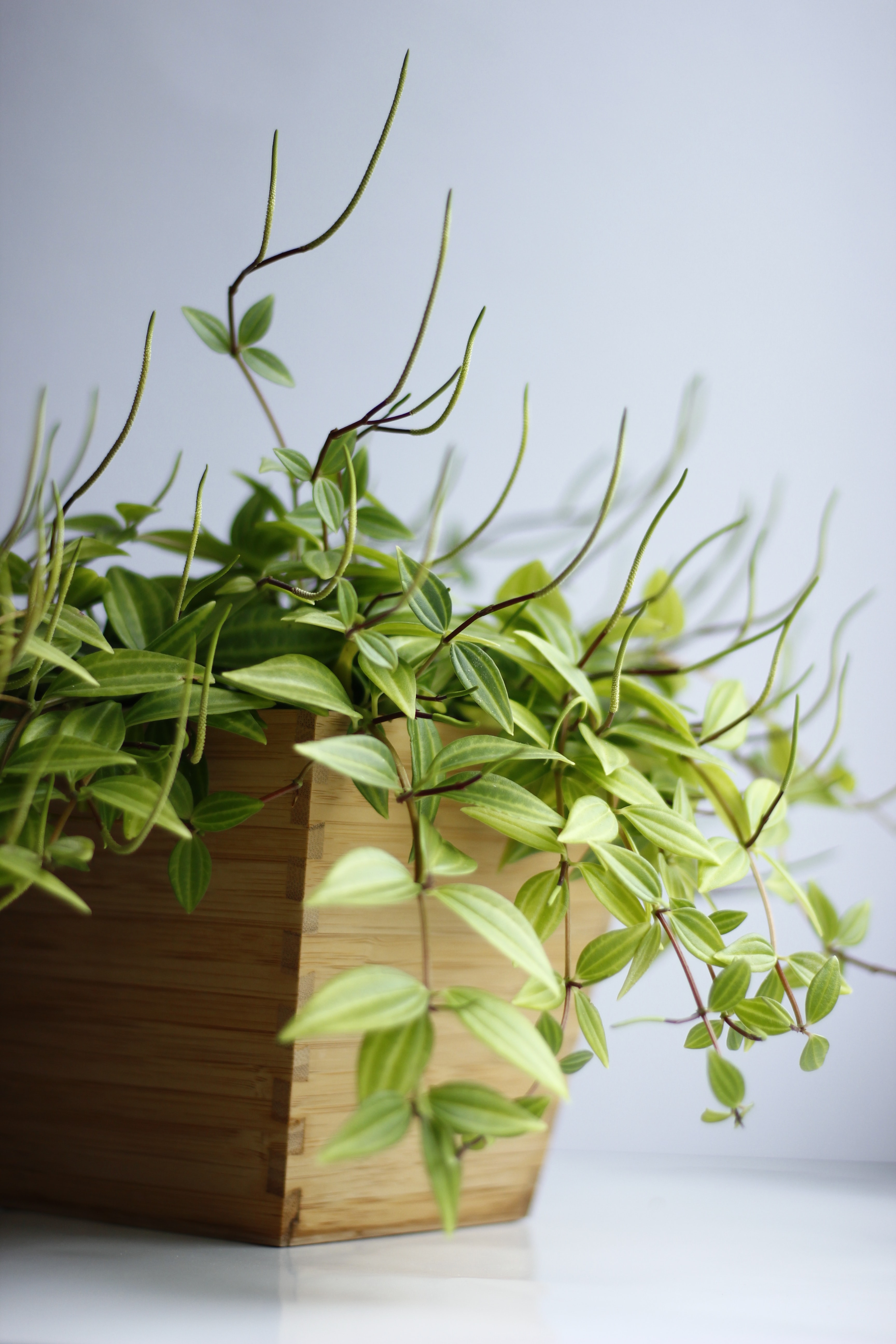 green leafed plant on brown wooden pot