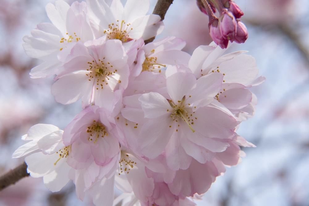 closeup photography pink petaled flowers