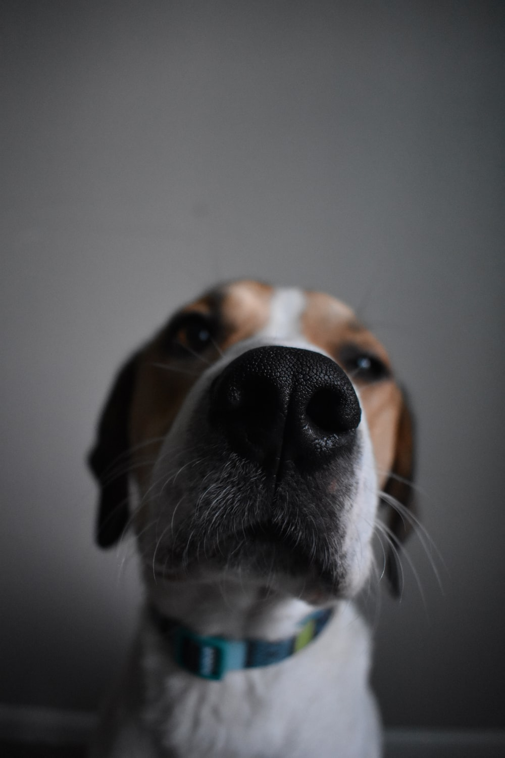 closeup photography of brown and white dog