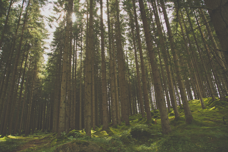 sunrays streaming through trees