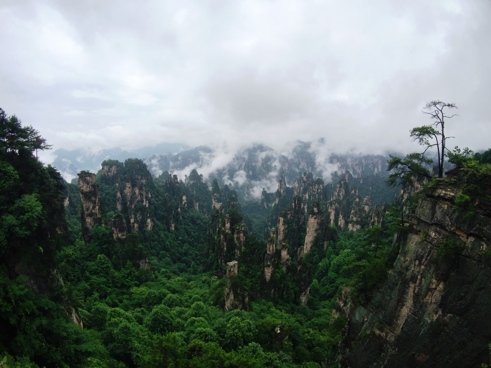 top view of forest and mountains