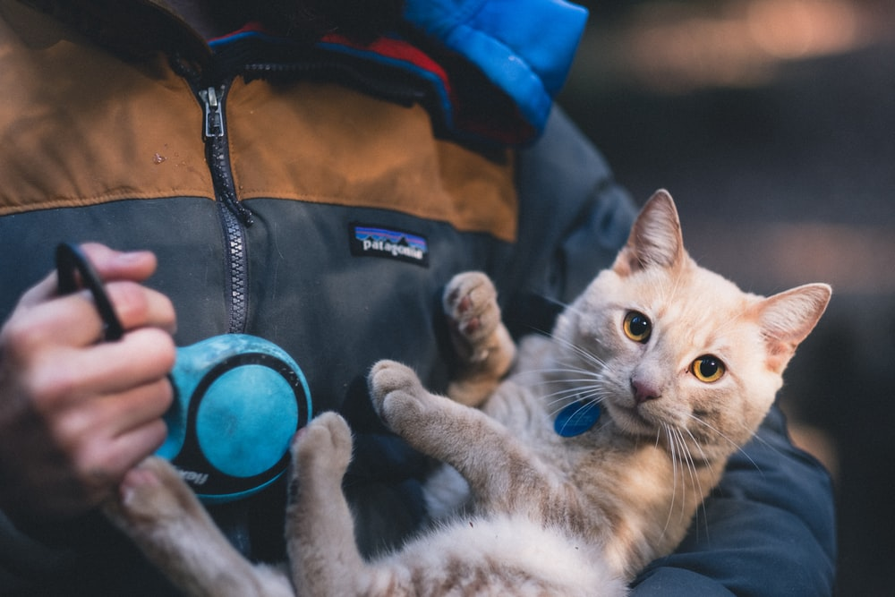 person carrying orange tabby cat