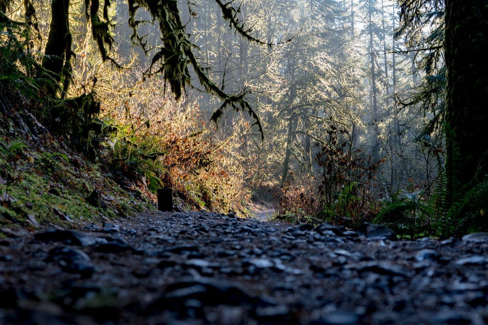 low angle photography of gravel road between green leafed trees