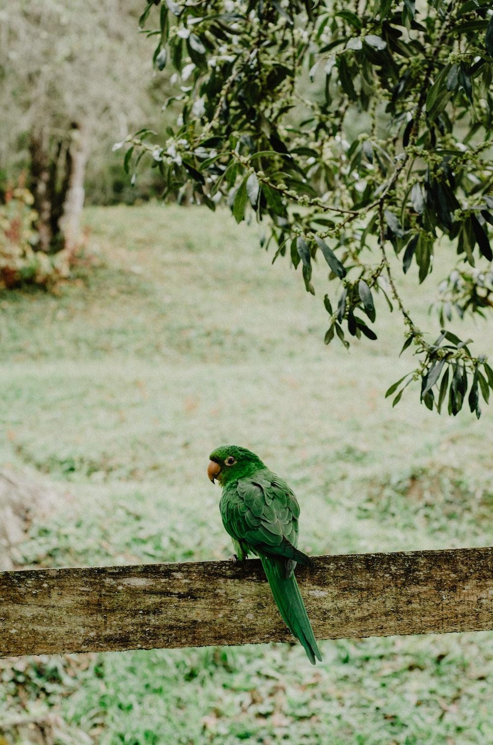perched green bird