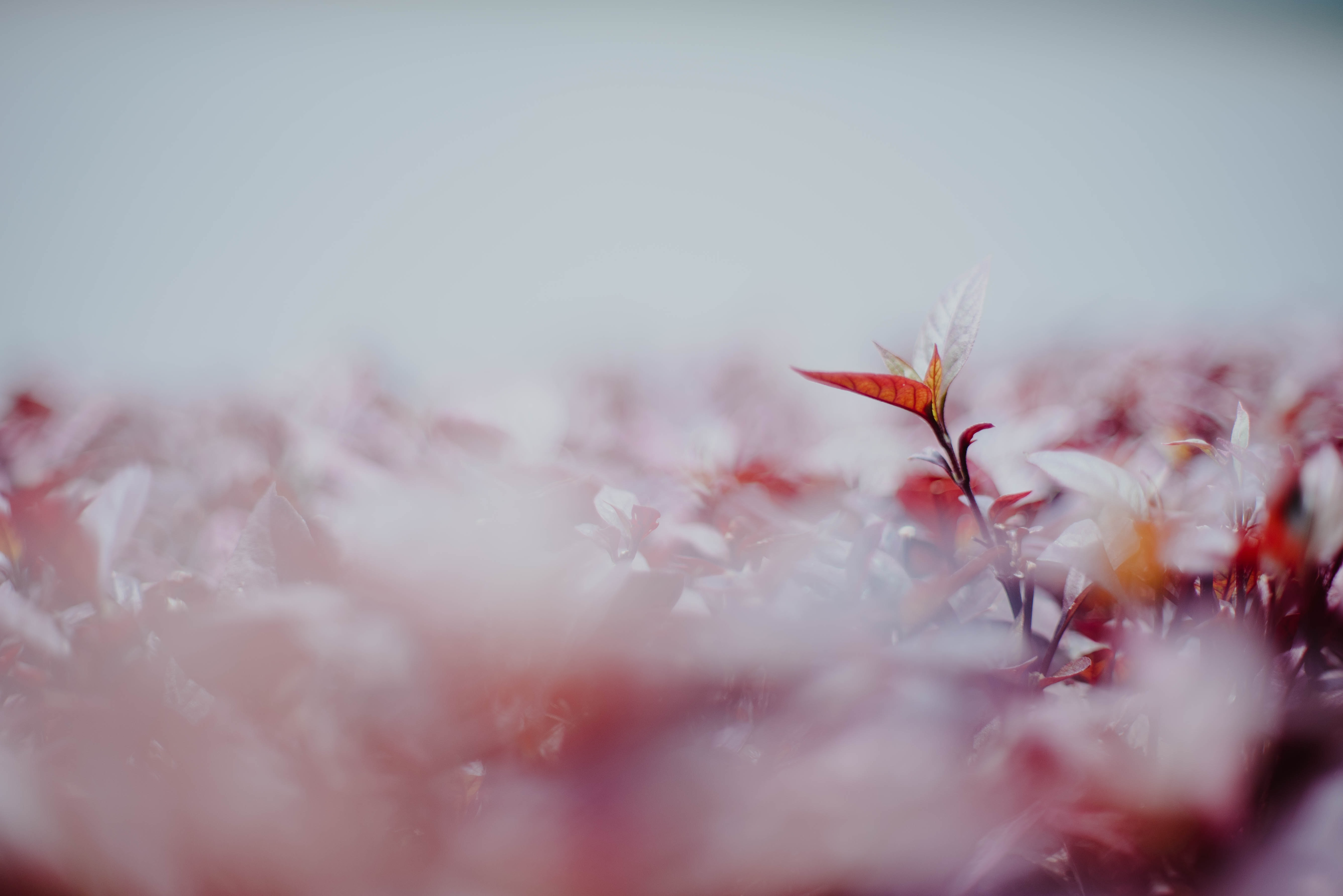 selective focus photography of brown leafed plants