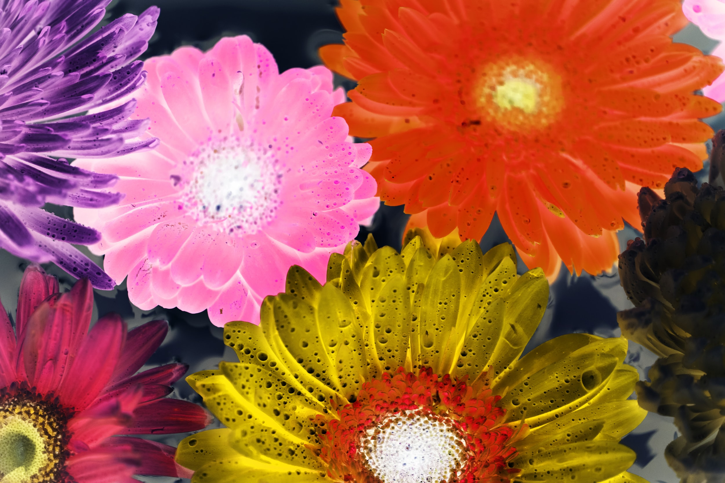assorted-color flowers in body of water