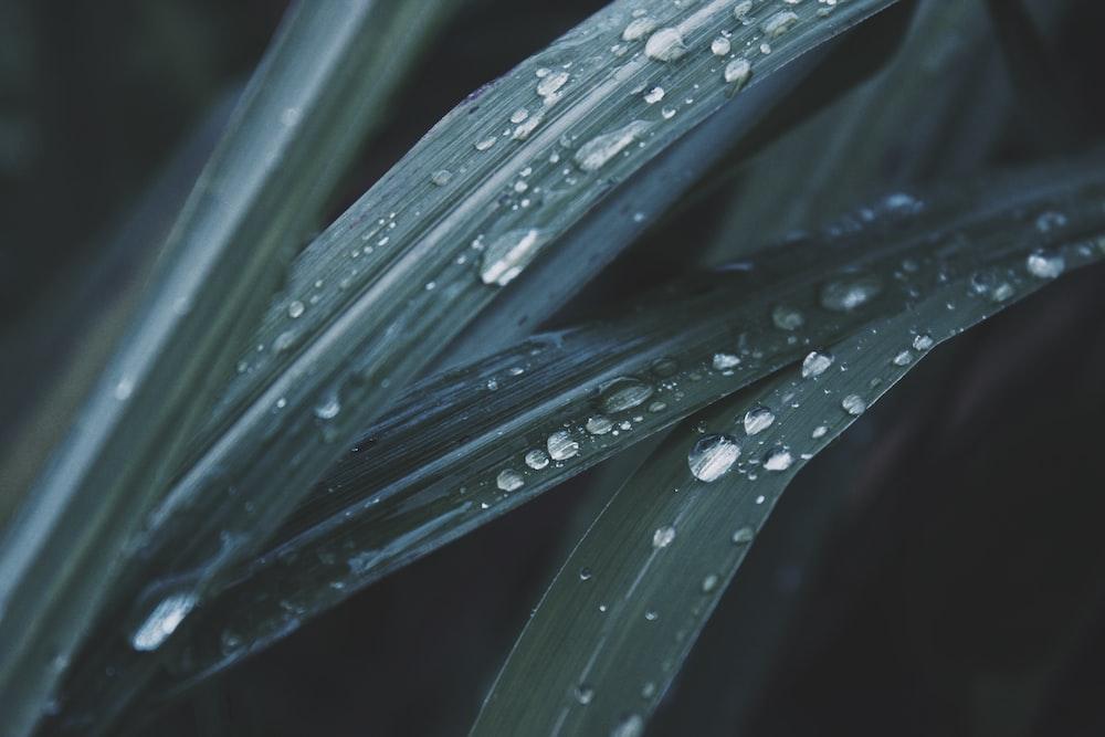 macro photo of dew in leaves