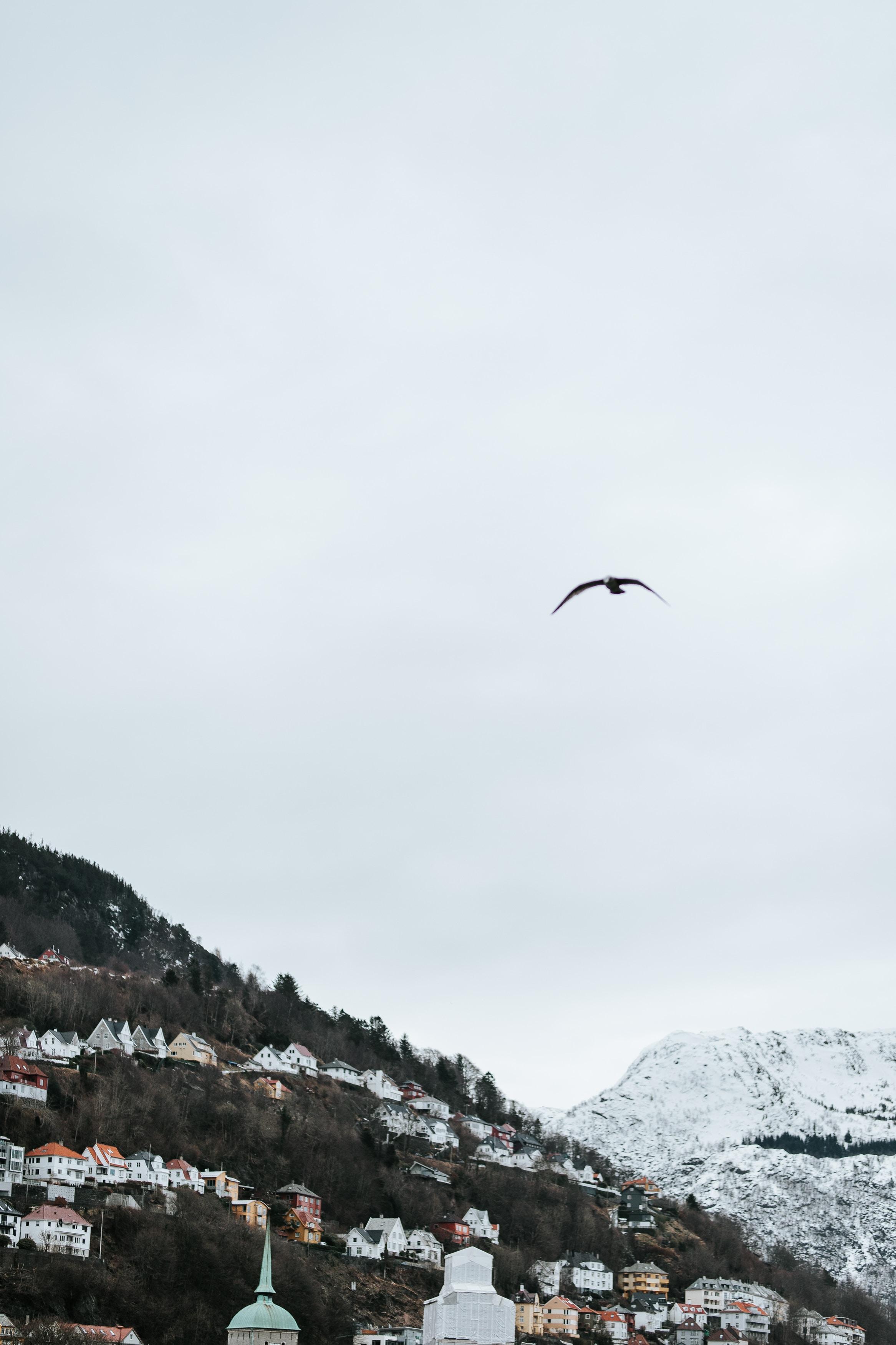 bird flying over village under cloudy sky