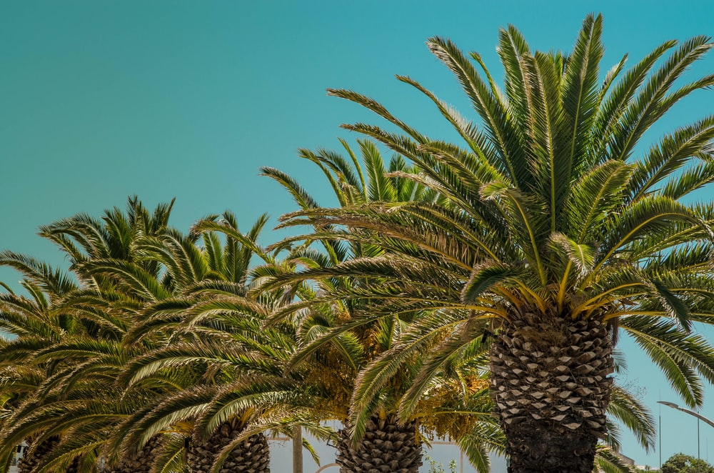 green and brown sago palm tree under blue sky