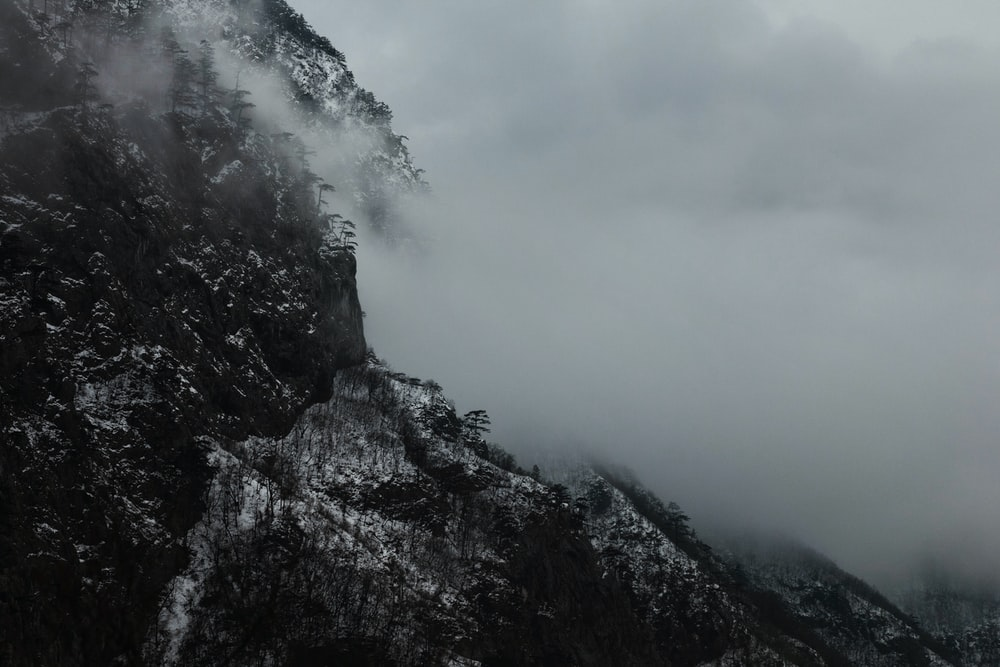 fog covered mountain forest
